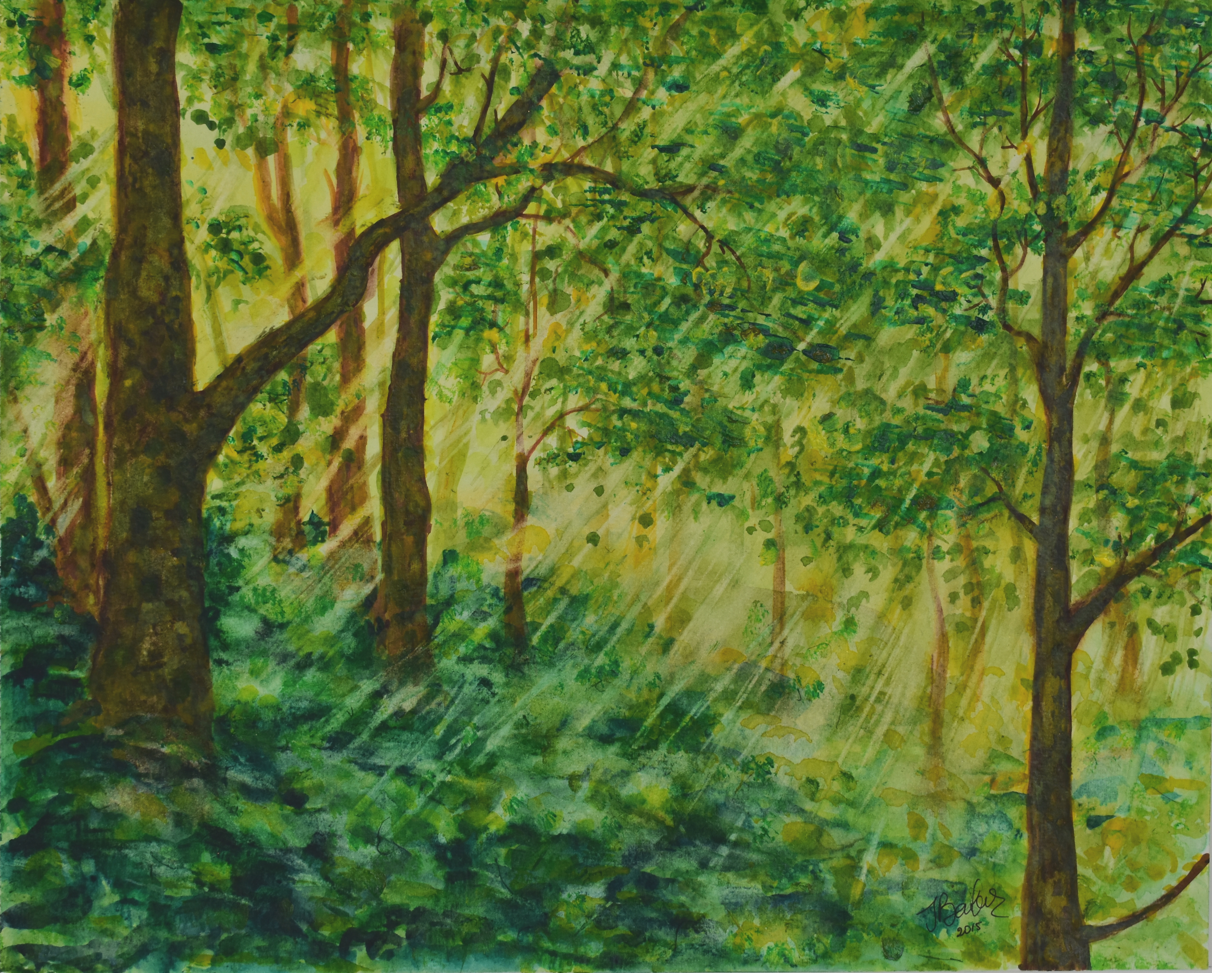 Sun Kissed Forest